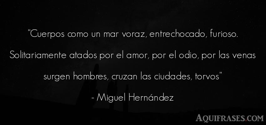 Frase de amor  de Miguel Hernández. Cuerpos como un mar voraz,