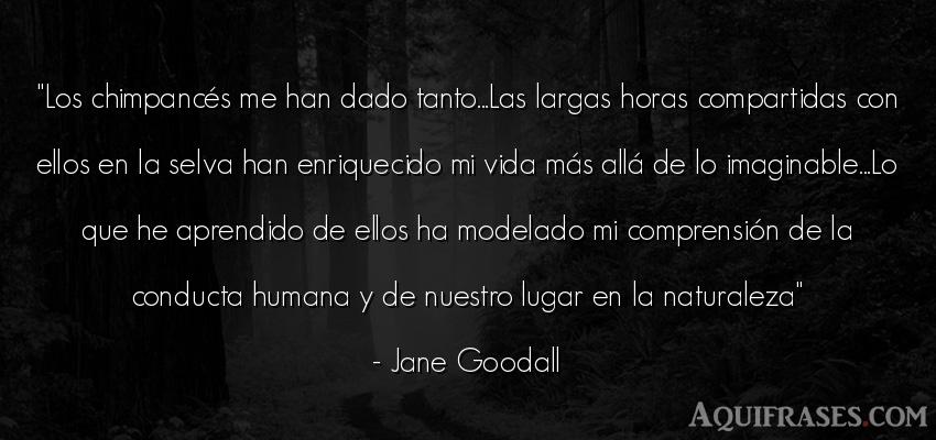Frase de la vida  de Jane Goodall. Los chimpancés me han dado