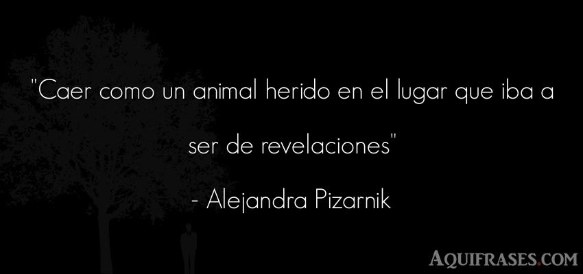 Frase de animales  de Alejandra Pizarnik. Caer como un animal herido